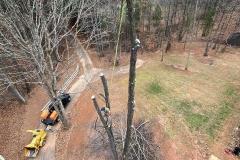 Lynchburg-VA-tree-service