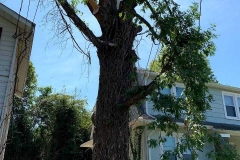 Lynchburg-VA-tree-trimming
