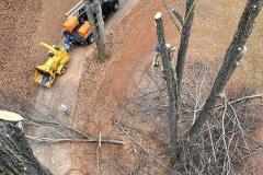 Lynchburg-tree-trimming