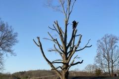 tree-cutting-Lynchburg-VA