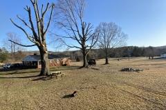 tree-cutting-Lynchburg
