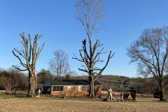 tree-service-Lynchburg-VA