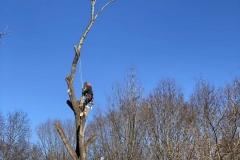 tree-trimming-Lynchburg-VA